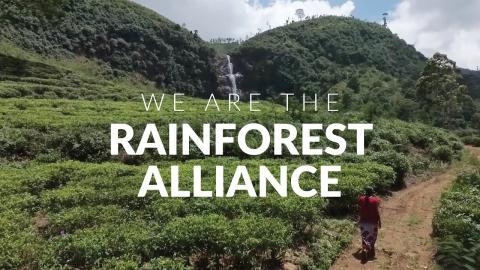 We Are the Rainforest Alliance