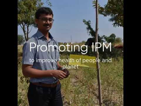 IPM actions